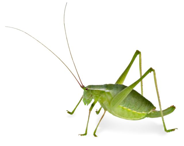 Insects Quiz Test Your Knowledge on Insects