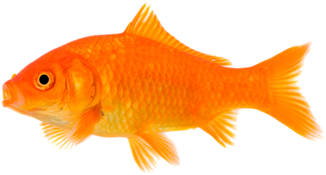 The best pet store in Birmingham, AL for exotic and domestic pets, tropical fish, and pet supplies. Call () or stop by for a visit.