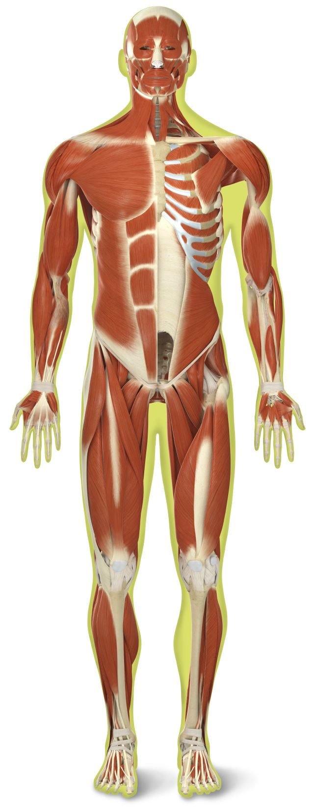 Human Body Quiz Human Body Quiz For Kids Dk Find Out