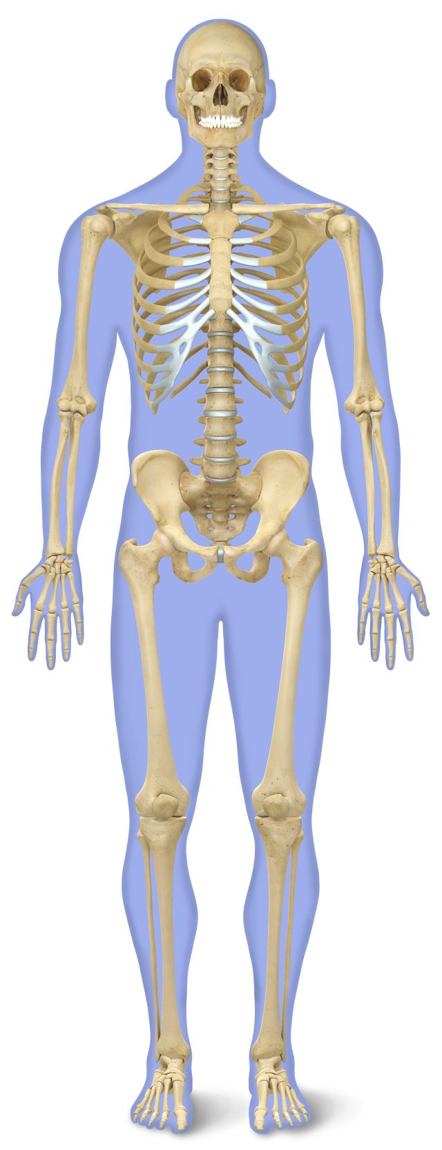 Human Body Systems Parts Of The Body Dk Find Out