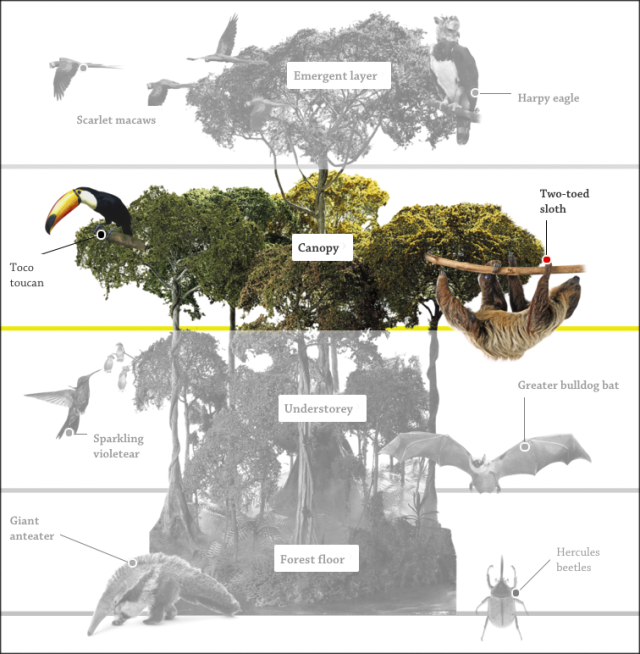 The Canopy Layer Canopy Layer Animals Dk Find Out