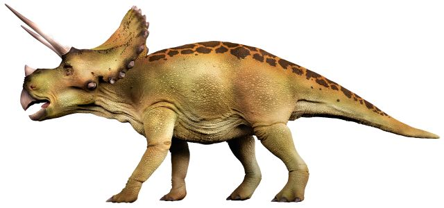 dinosaur facts types of dinosaurs dk find out
