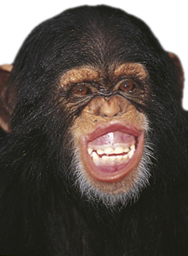 Primates Quiz | Quiz About Primates | DK Find Out