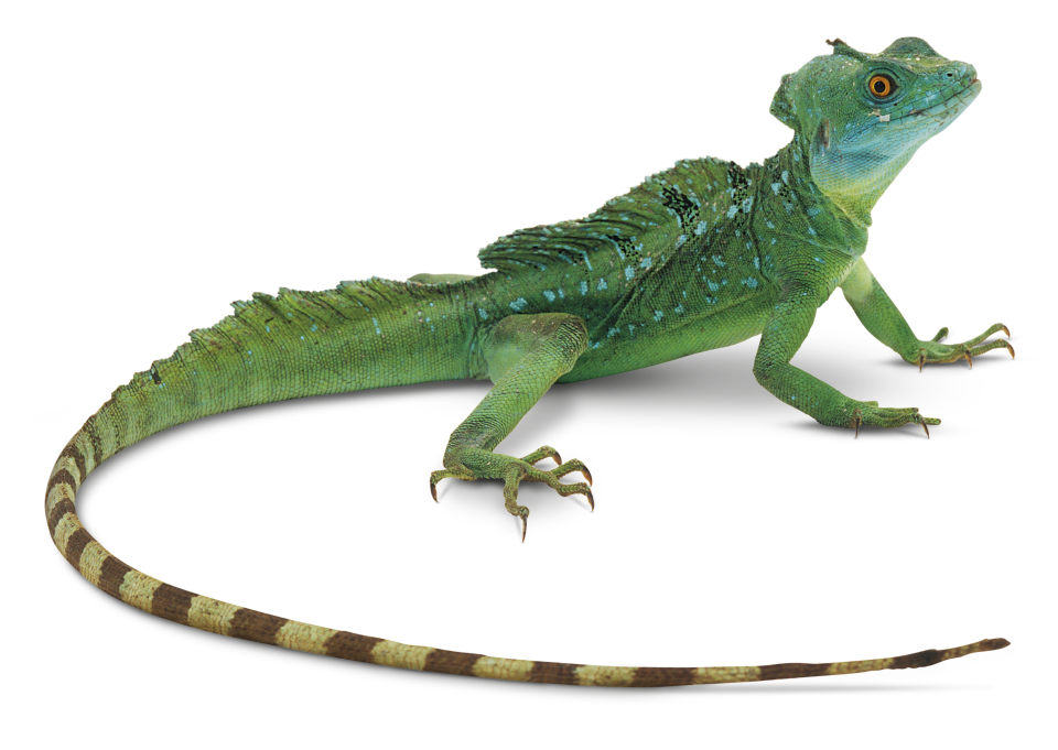 Facts About Lizards | What is a Lizard | DK Find Out