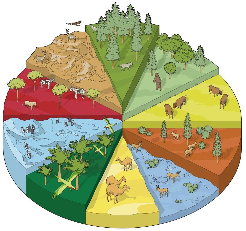 Habitats Quiz Quiz