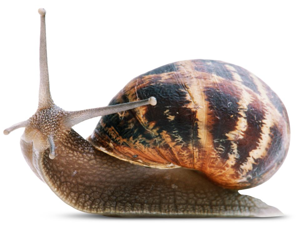 what are invertebrates invertebrates facts dk find out