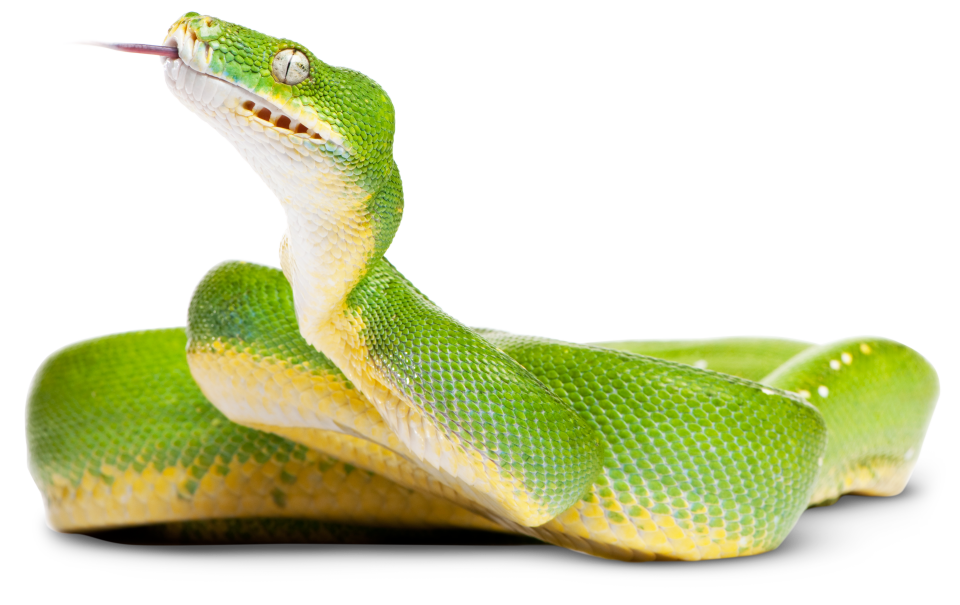 Types of Reptiles | Reptile Facts