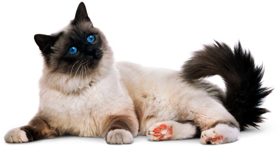 Oldest Domestic Cat Uk