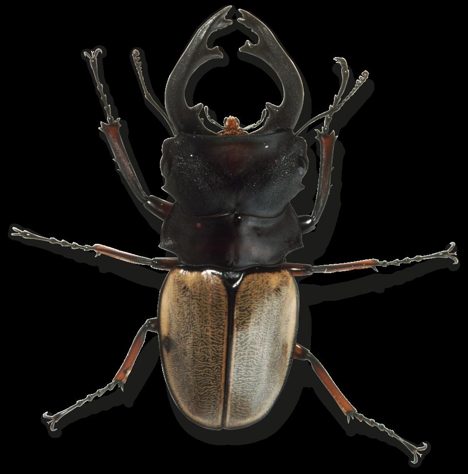 Spider Exoskeleton 1 by Shadowflashdabearded on DeviantArt |Examples Of Exoskeleton Animals