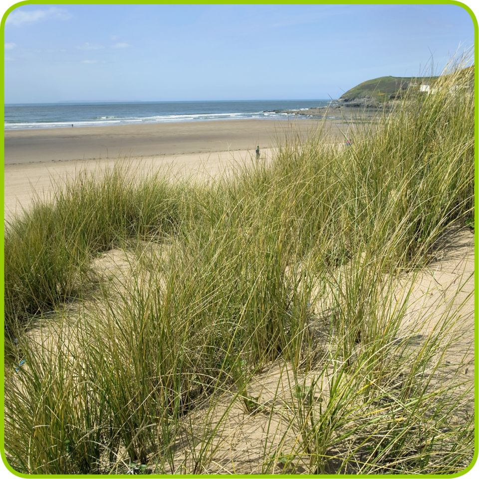 Beaches And Sand Dunes Beach Formation Facts Dk Find Out