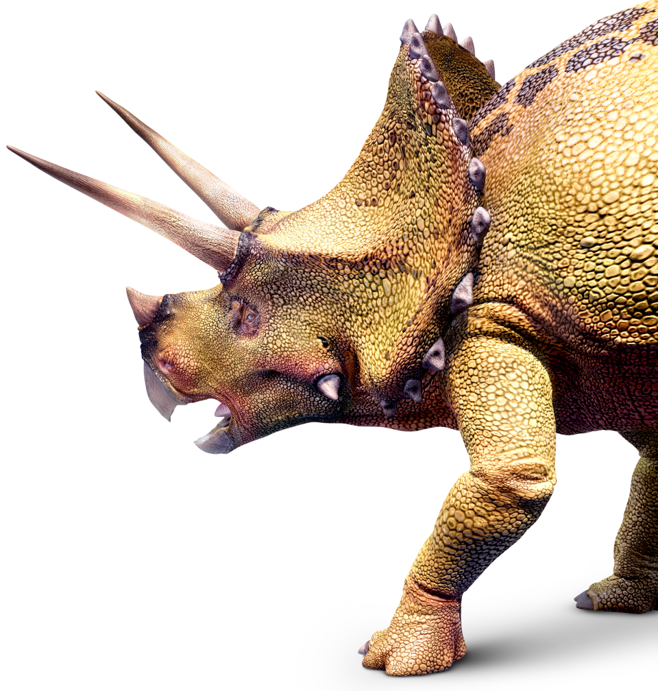 triceratops right xxyils