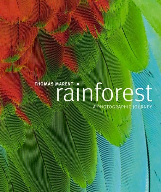 eBook cover of Rainforest