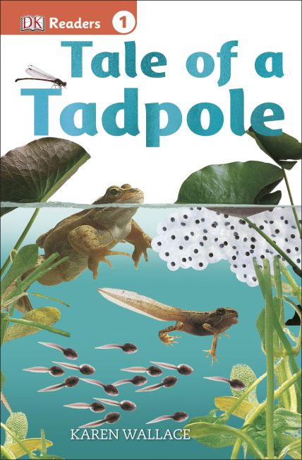 Paperback cover of DK Readers L1: Tale of a Tadpole