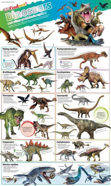 Wallchart cover of DKfindout! Dinosaurs Poster