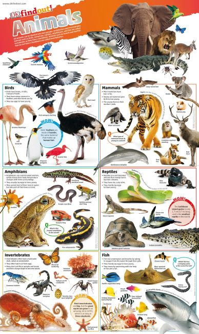Wallchart cover of DKfindout! Animals Poster