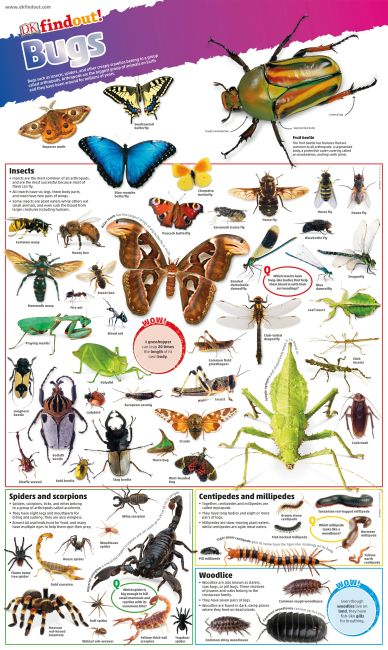 Wallchart cover of DKfindout! Bugs Poster