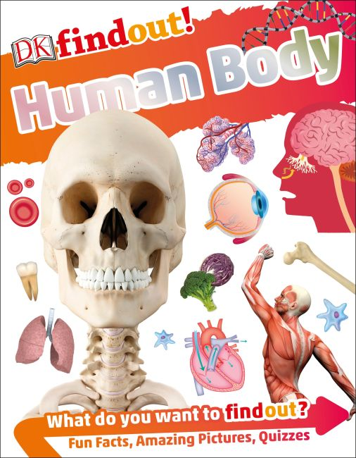 Paperback cover of DKfindout! Human Body