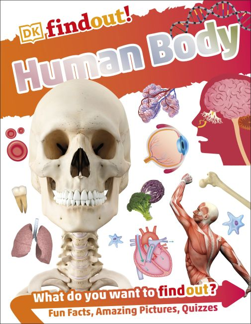 Hardback cover of DKfindout! Human Body