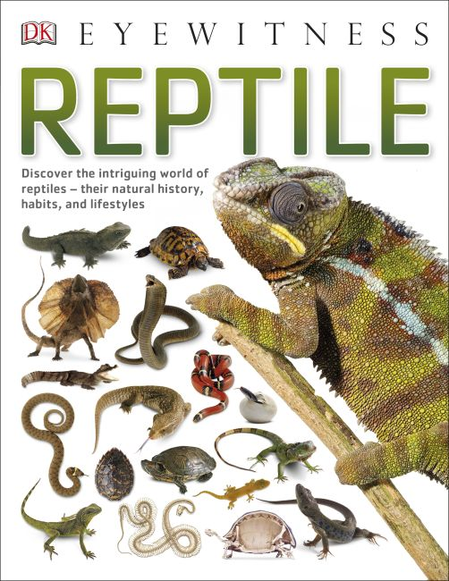 Paperback cover of Reptile