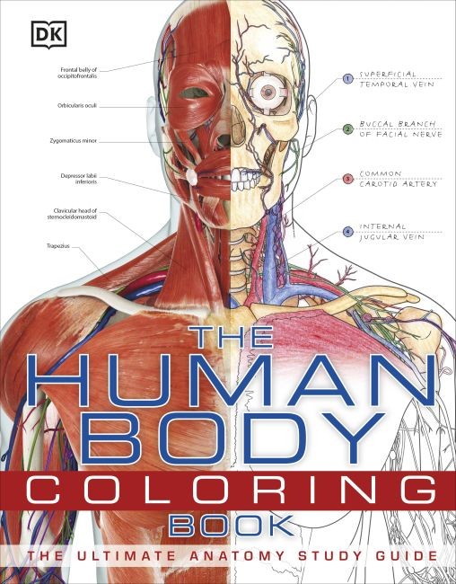Flexibound cover of The Human Body Coloring Book
