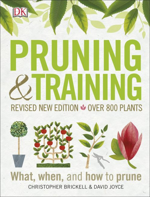 Paperback cover of Pruning and Training
