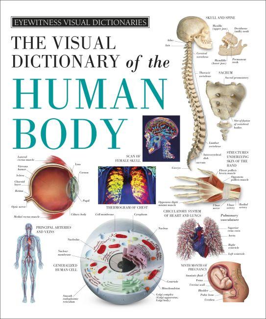 Hardback cover of Eyewitness Visual Dictionaries: The Visual Dictionary of the Human Body