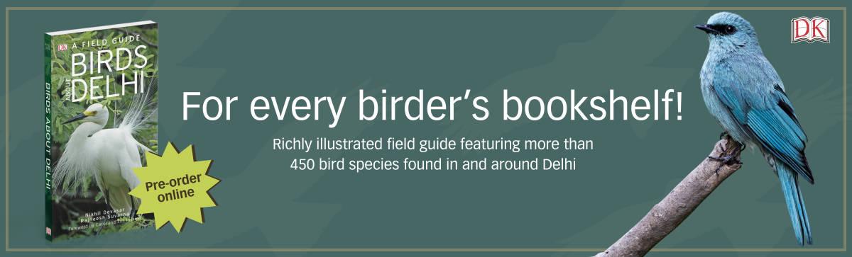 Birds About Delhi