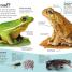 Thumbnail image of DKfindout! Reptiles and Amphibians - 1