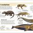 Thumbnail image of Mammals - 1