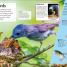 Thumbnail image of DKfindout! Birds - 2