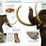 Thumbnail image of Knowledge Encyclopedia Dinosaur! - 1