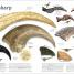 Thumbnail image of The Dinosaurs Book - 1