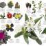 Thumbnail image of Natural History - 2