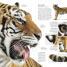 Thumbnail image of Natural History - 3