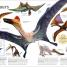 Thumbnail image of The Dinosaurs Book - 5