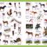 Thumbnail image of Eye Wonder: Horses and Ponies - 2