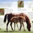 Thumbnail image of Eye Wonder: Horses and Ponies - 3