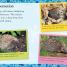 Thumbnail image of Hello Hedgehog - 2