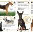 Thumbnail image of Pocket Genius: Dogs - 1
