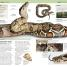 Thumbnail image of Nature Guide: Snakes and Other Reptiles and Amphibians - 3