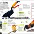 Thumbnail image of DKfindout! Birds - 3