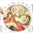 Thumbnail image of Human Anatomy - 3