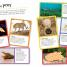 Thumbnail image of Ultimate Sticker Book: Deadly Animals - 2