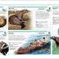 Thumbnail image of Mammals - 4