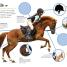 Thumbnail image of Ultimate Sticker Book: Horses and Ponies - 3