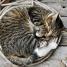 Thumbnail image of The Cat Encyclopedia - 3