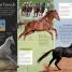 Thumbnail image of Eye Wonder: Horses and Ponies - 4