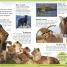 Thumbnail image of First Animal Encyclopedia - 1