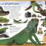 Thumbnail image of First Animal Encyclopedia - 3