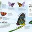 Thumbnail image of Bugs Ultimate Sticker Book - 4